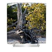 Driftwood On The Beach Shower Curtain