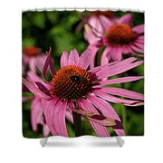 Eastern Purple Coneflower Shower Curtain