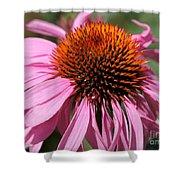 Echinacea Purpurea Or Purple Coneflower Shower Curtain