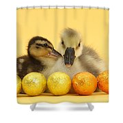 Embden X Greylag Gosling And Mallard Shower Curtain