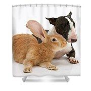Flemish Giant Rabbit And Miniature Bull Shower Curtain