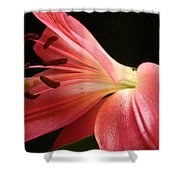 Floral 0039 Shower Curtain