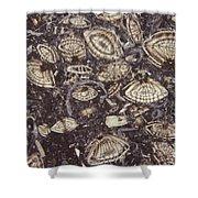 Foraminiferous Limestone Lm Shower Curtain by M. I. Walker