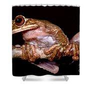 Fringe Limb Tree Frog Shower Curtain
