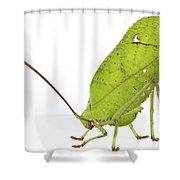 Giant Leaf Katydid Barbilla Np Costa Shower Curtain