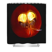 Giant Ostracod Shower Curtain
