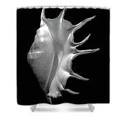 Giant Spider Conch Seashell Lambis Truncata Shower Curtain