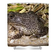 Gopher Frog Shower Curtain