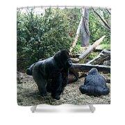 Gorillas Shower Curtain