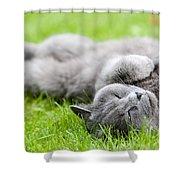 Gray Cat  Shower Curtain