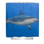 Gray Reef Shark. Papua New Guinea Shower Curtain