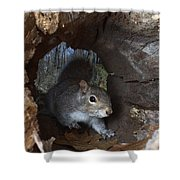 Gray Squirrel Shower Curtain by Ted Kinsman