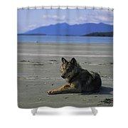 Gray Wolf On Beach Shower Curtain