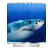 Great White Shark, Guadalupe Island Shower Curtain