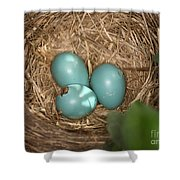Hatching Robin Nestlings Shower Curtain