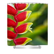 Heliconia Blossom Shower Curtain