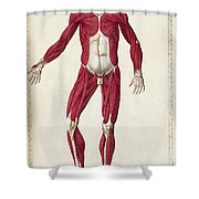 Historical Anatomical Illustration Shower Curtain