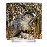 Hoary Marmot Shower Curtain