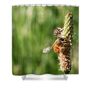 2 Honey Bees Hard At Work Shower Curtain