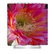 Hot Pink Cactus Flower Shower Curtain