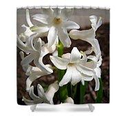 Hyacinth Named Aiolos Shower Curtain
