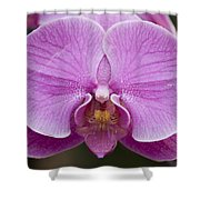 Hybrid Orchids At The Atlanta Botanical Shower Curtain