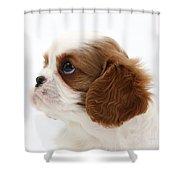 King Charles Spaniel Puppy Shower Curtain