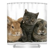 Kitten And Rabbits Shower Curtain