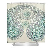 Lily Anther Lm Shower Curtain