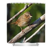 Lincolns Sparrow Shower Curtain