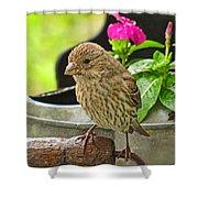 Little Girl Finch Shower Curtain
