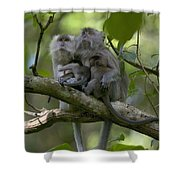 Long-tailed Macaque Macaca Fascicularis Shower Curtain by Cyril Ruoso