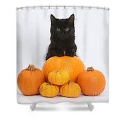 Maine Coon Kitten And Pumpkins Shower Curtain