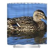 Mallard Hen Shower Curtain