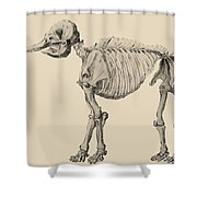 Mastodon Skeleton Shower Curtain by Science Source