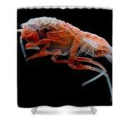 Mesopelagic Amphipod Shower Curtain