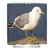 Mew Gull Shower Curtain