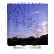 Mexican Freetail Bats Shower Curtain