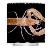 Miami Cave Crayfish Shower Curtain