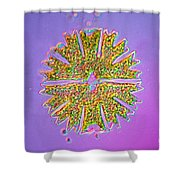 Micrasterias Shower Curtain