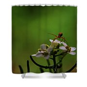 Mountains To Climb  Shower Curtain
