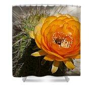 Orange Cactus Flower Shower Curtain
