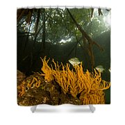 Orange Sponges Grow Shower Curtain