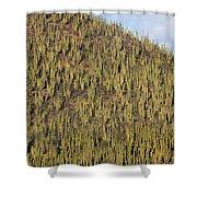 Organ Pipe Cactus Stenocereus Thurberi Shower Curtain