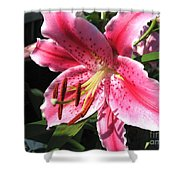 Oriental Lily Named Tiber Shower Curtain