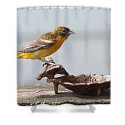Oriole Shower Curtain