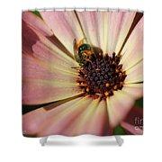 Osteospermum Named Sunadora Palermo Shower Curtain