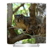 Out On A Branch Shower Curtain