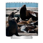 Pier 39 San Francisco Shower Curtain