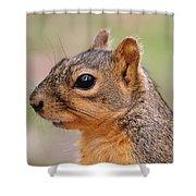 Pine Squirrel Shower Curtain